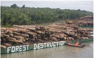 flckr. Greenpeace International