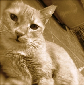 MUSTARD: Winner, Ms. Congeniality (Graduated to Cat heaven, 2013)